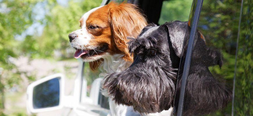 Parcs à chiens près de Willow Grove, PA